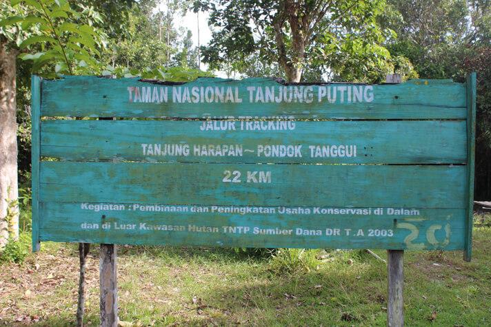 Couples_Coordinates_Indonesian_Orangutans3