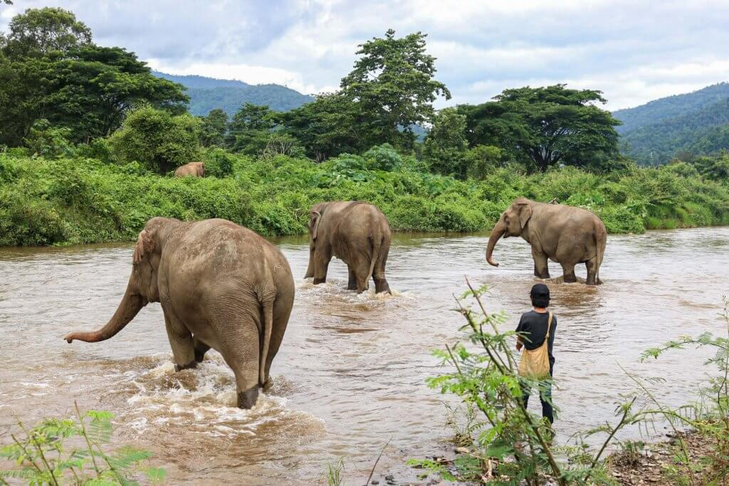 couples coordinates why you shouldn't ride elephants in thailand 3
