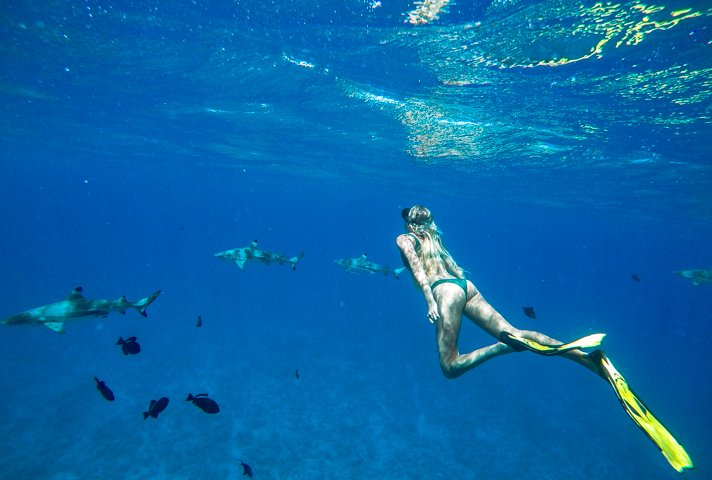 alex couples coordinates four seasons bora bora review shark and sting ray safari