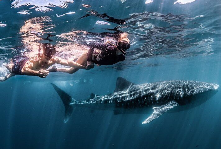 swim with whale sharks in exmouth australia ningaloo discovery and couples coordinates