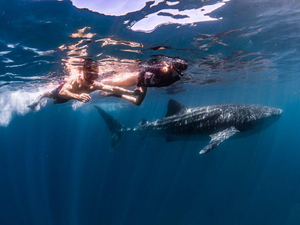 michael and alex swim with a whale shark exmouth australia ningaloo reef